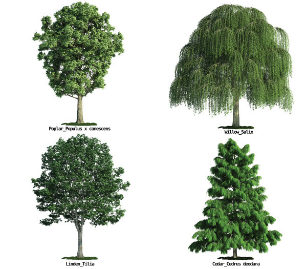 large trees HD pictures  2