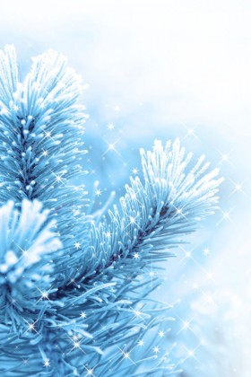 Beautiful pine background picture 05