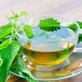 HD picture nettle tea 03   HD picture