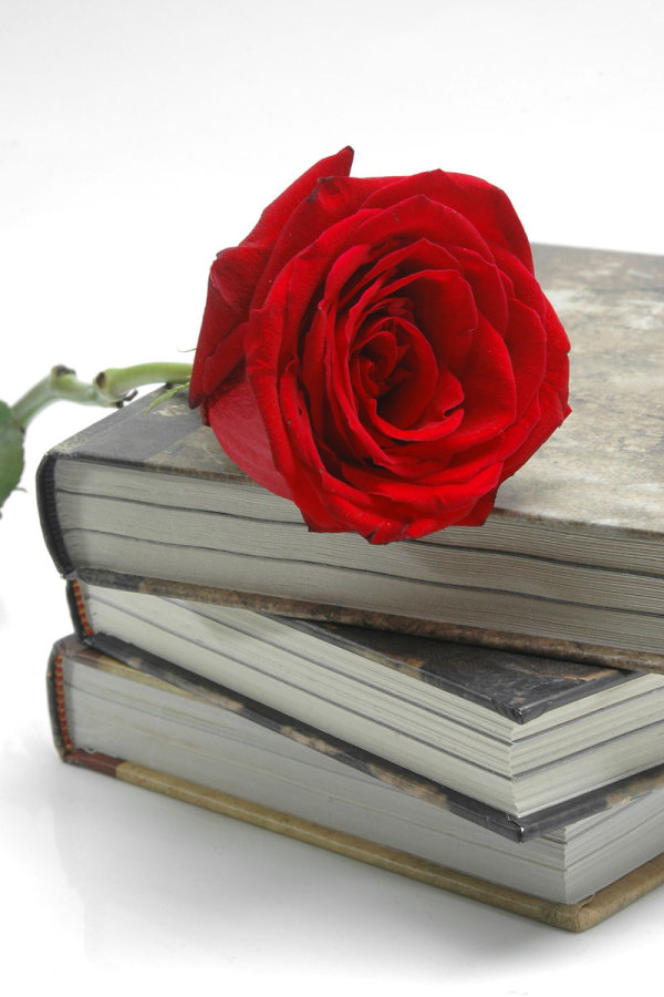 High quality pictures of the old books and Roses 03   high definition picture