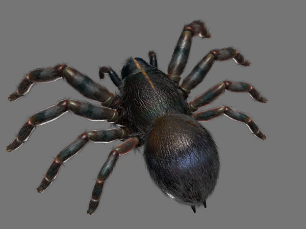 Spider 3D material