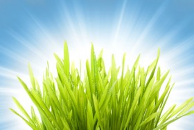Beautiful green natural 02   HD Pictures