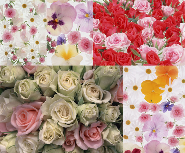 5 paragraph Flower HD picture