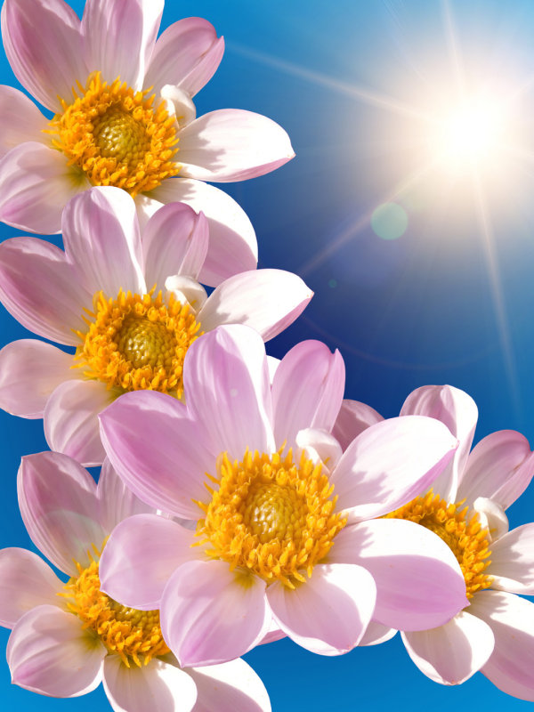 Beautiful flowers HD pictures
