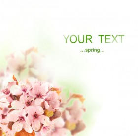 Beautiful flowers background 03   HD Images