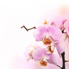 Beautiful flowers background 04   HD Images