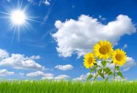 Blue sky with sunflower 02   HD picture