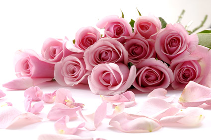 Bouquet of pink roses picture material