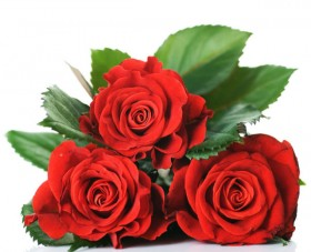 Bright roses 02   high definition picture