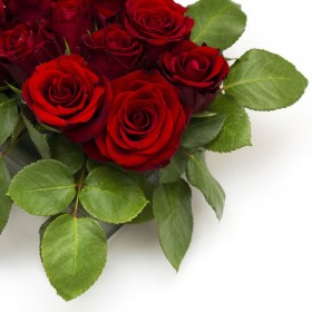 Bright roses 04   high definition picture