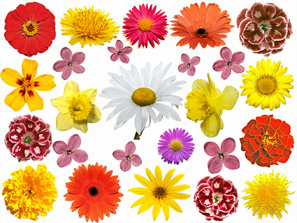 Colorful flowers Images