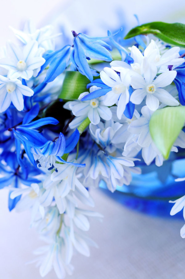 Exquisite blue flowers 02   HD Images