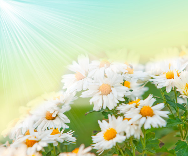 Fantasy flowers HD picture  1