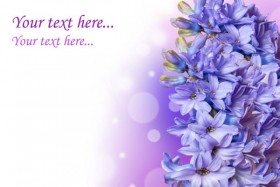 Gorgeous hyacinth 03   HD Images