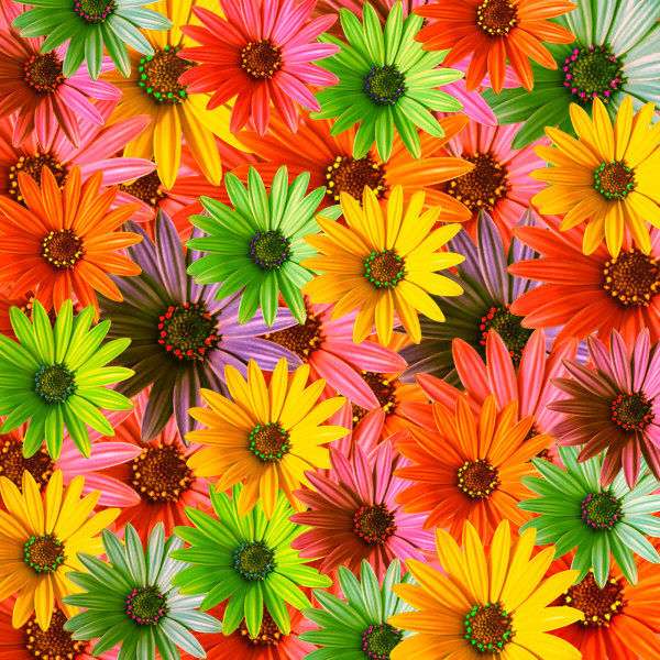 HD pictures of colorful flowers background