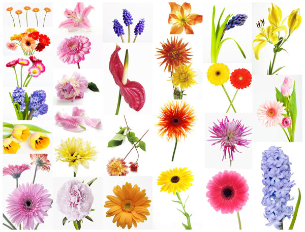 High quality pictures of beautiful flowers