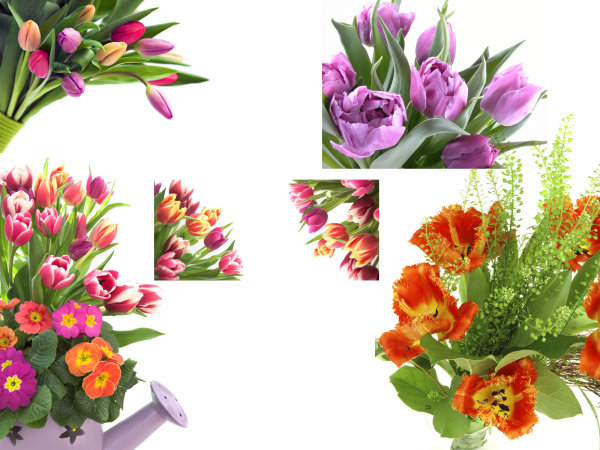 High quality pictures of flowers