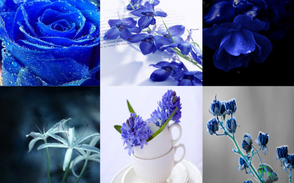 High quality pictures of plants and flowers: the quiet elegance of the Blue