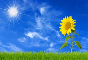 High quality pictures of the blue sky and sunflower 01   HD picture
