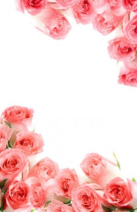 Pink bouquet of roses picture material