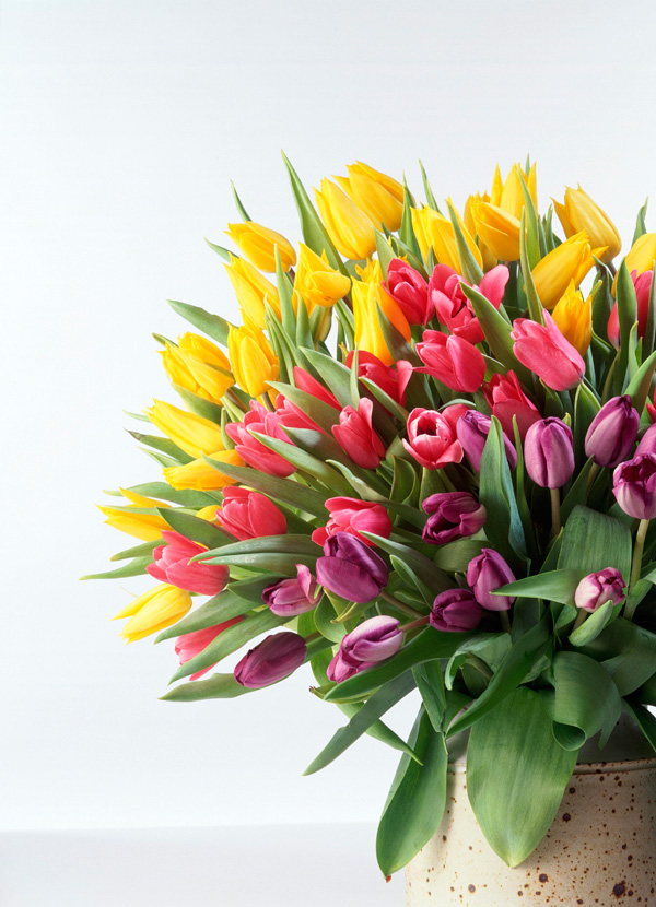Tulip bouquets HD picture material