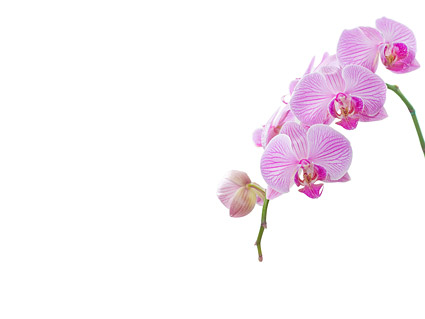 Orchid white picture footage  6