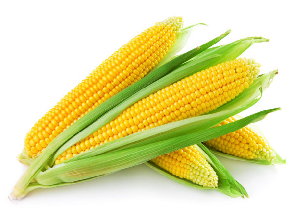 Corn Image 02   HD Images