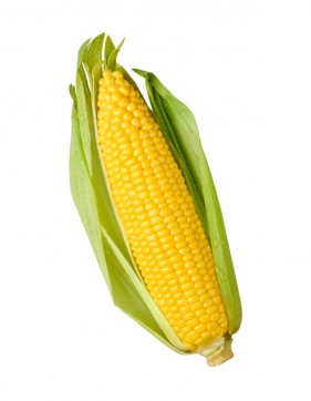 In maize Pictures 01   HQ Pictures