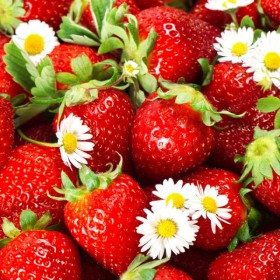Strawberry Photo 04   HD Images
