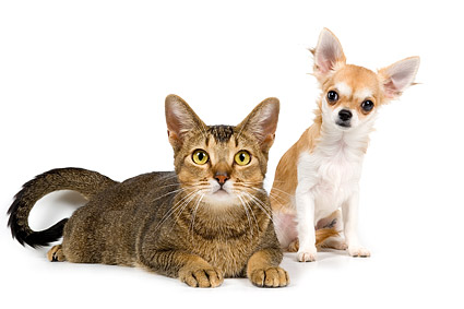 Cute pictures of cats and dogs material  5
