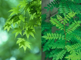 2 Green leaves HD Image