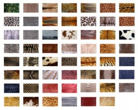 Animal fur texture sets of plans