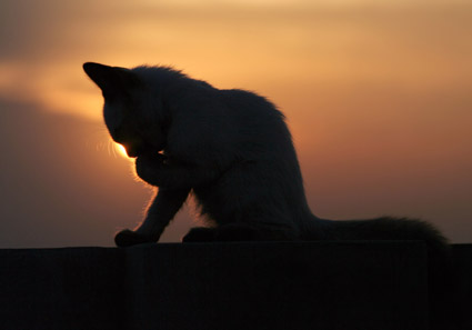 Beautiful cats picture material  2