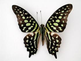Butterfly Images  8