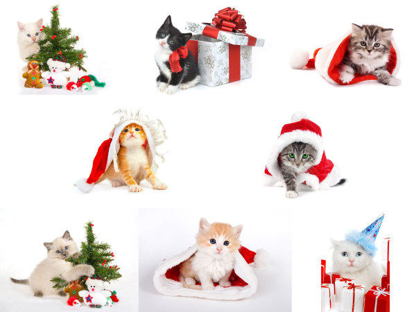 Cats over Christmas HD Photo Gallery