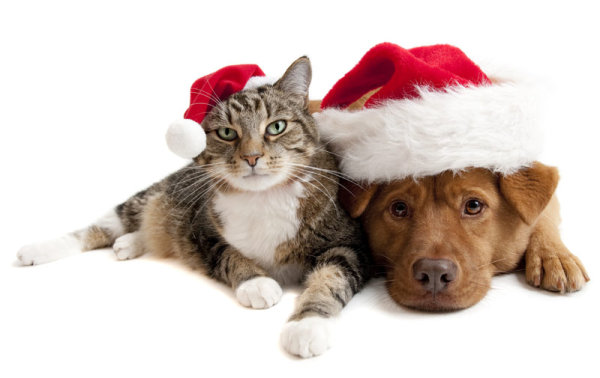 Cute Christmas cat and dog   high definition picture