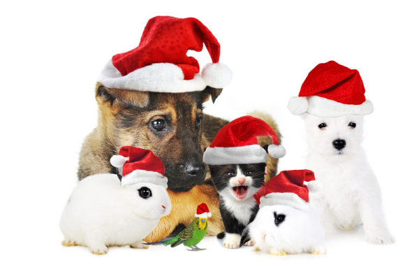 Cute Christmas cat rabbit dog   high definition picture