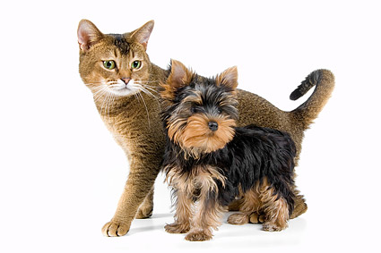Cute cat and dog picture material  3