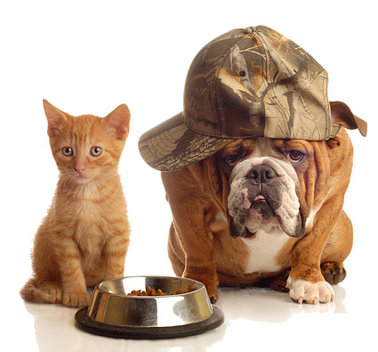 Cute cat and dog picture material  7