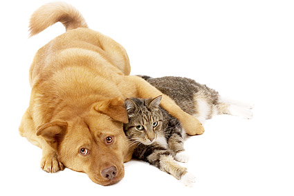 Cute cats and dogs Images