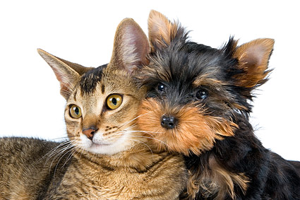 Cute pictures of cats and dogs material  2
