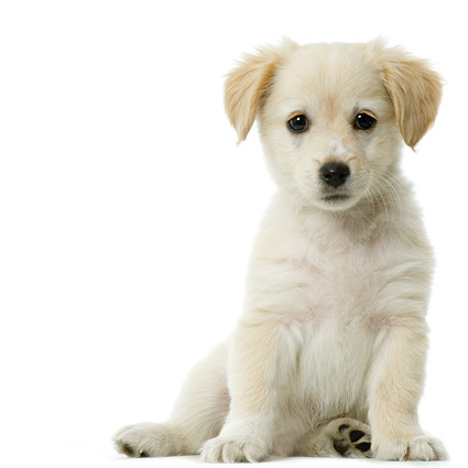 Cute puppy Photo Images  7
