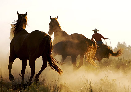 Galloping horses Images