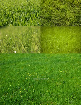 Green grass grass close up HD Photo  3 (5 Pics)