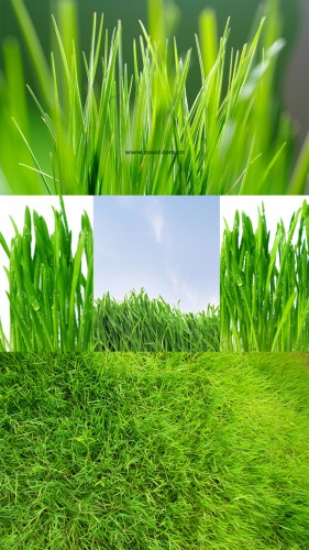 Green grass grass close up HD picture  1 (5 Pics)