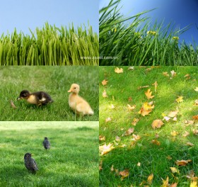 Green grass grass close up HD picture  4 (5 Pics)