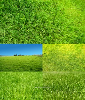 Green grass grass close up HD pictures  2 (5 Pics)