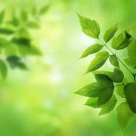 Green leafy background 02   HD Pictures
