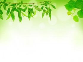 Green leafy background 04   high definition pictures