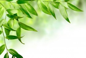 Green leafy background 05   HD Images